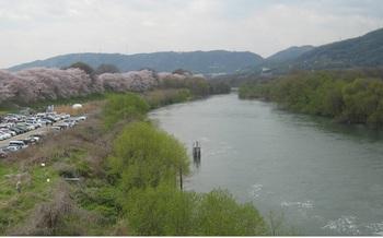 宇治川桜.jpg