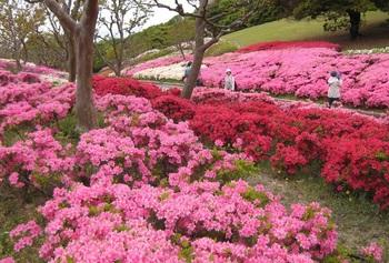 日本庭園つつじ.jpg