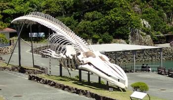 鯨骨模型.JPG
